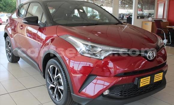 Buy Used Toyota C-HR Red Car in Manzini in Manzini