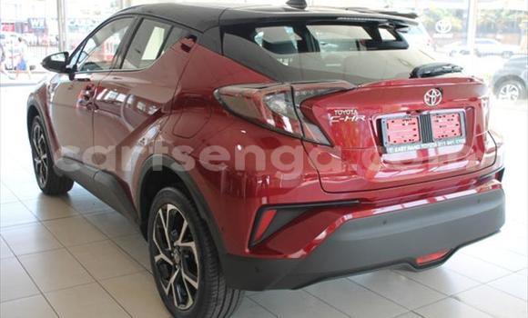 Buy Used Toyota C-HR Red Car in Tshaneni in Lubombo