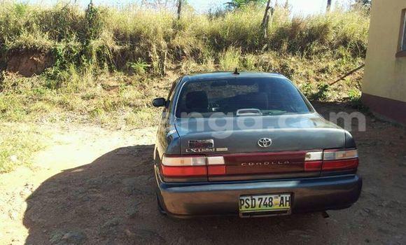 Buy Used Toyota Corolla Black Car in Manzini in Swaziland