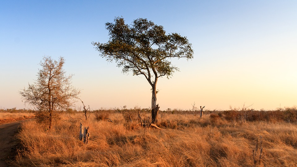 Swaziland 2637308 960 720